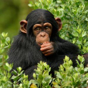 download 357 Monkeys Wallpapers