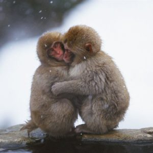 download Snow hugged the monkey wallpaper – 1280×1024 wallpaper download –