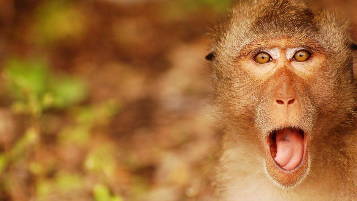 1920×1080 Surprised Monkey Wallpaper