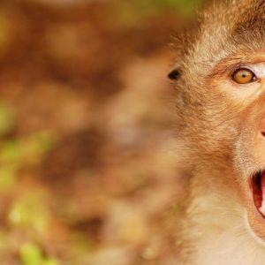 download 1920×1080 Surprised Monkey Wallpaper