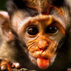 download Funny Monkey Wallpaper | Funny Monkey Pictures | Cool Wallpapers