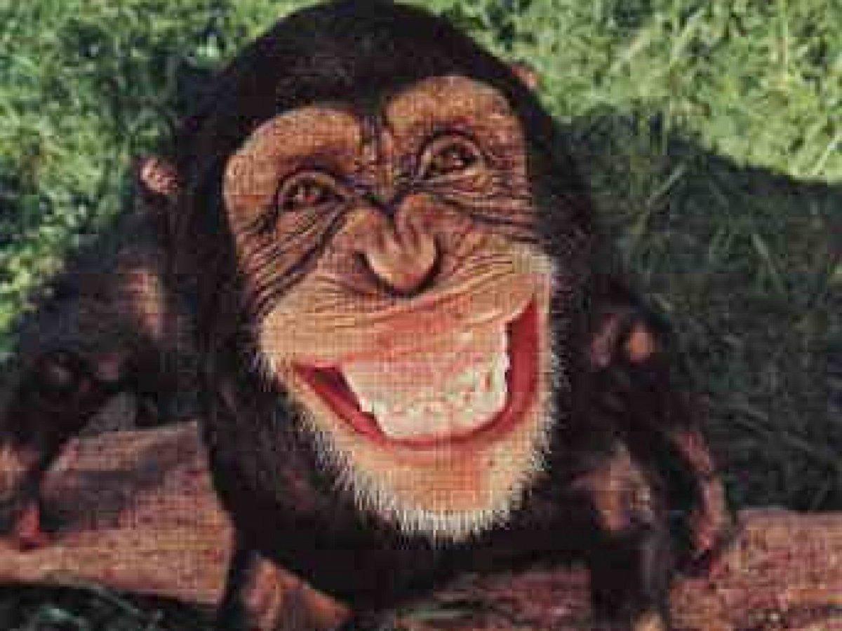 Baby Monkey Wallpaper 4 – Animal Backgrounds