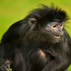 download Spider Monkey Wallpaper | Spider Monkey Pictures | Cool Wallpapers