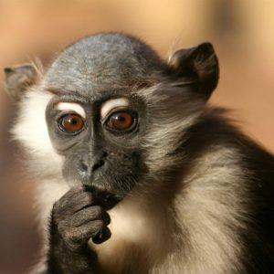 download Monkey Wallpaper Download 625 HD Pictures | Best Wallpaper Photo