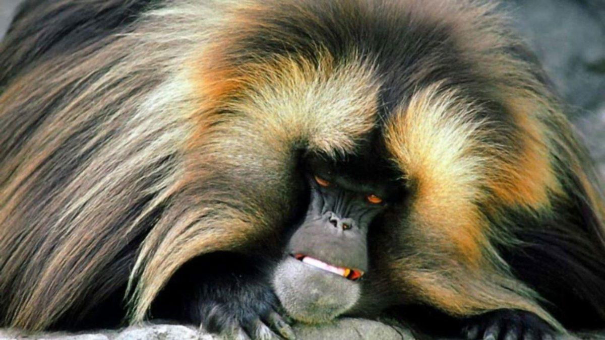Monkey 2865 – Monkey Wallpaper
