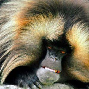 download Monkey 2865 – Monkey Wallpaper