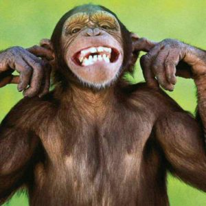 download monkey wallpaper | monkey wallpaper
