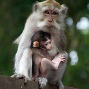download Monkey Monkey (id: 184559) | WallPho.