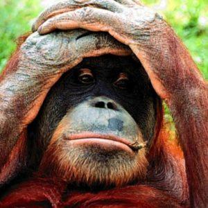 download monkey wallpaper   monkey wallpaper – Part 6