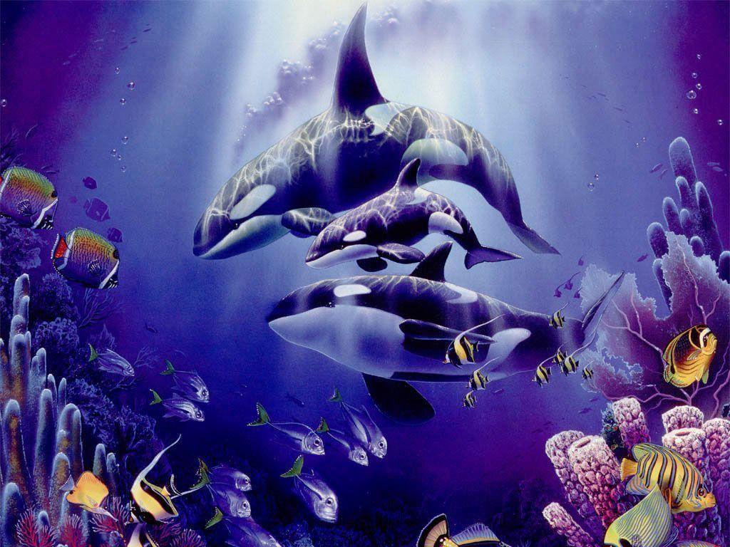 Beautifull Purple Orca Wallpaper High Resoluti #5219 Wallpaper …