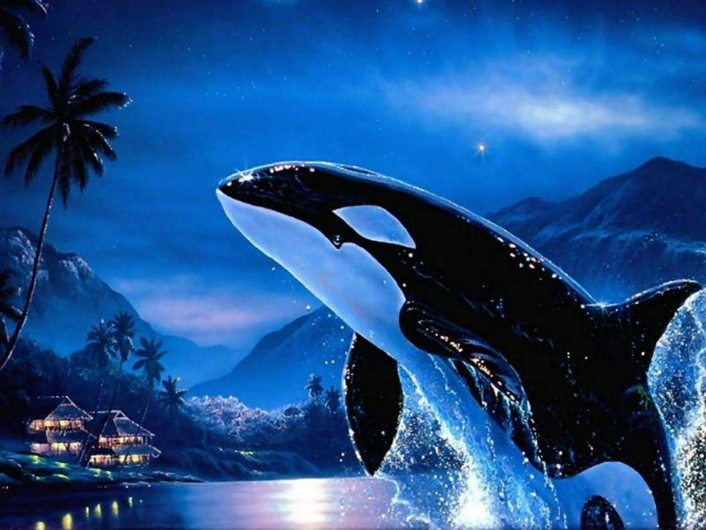 Images For > Orca Wallpaper