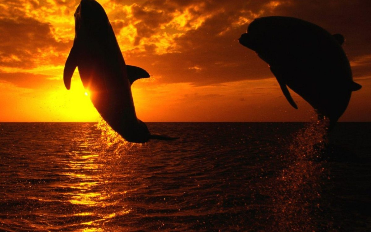 Orca wallpaper – Animal Backgrounds