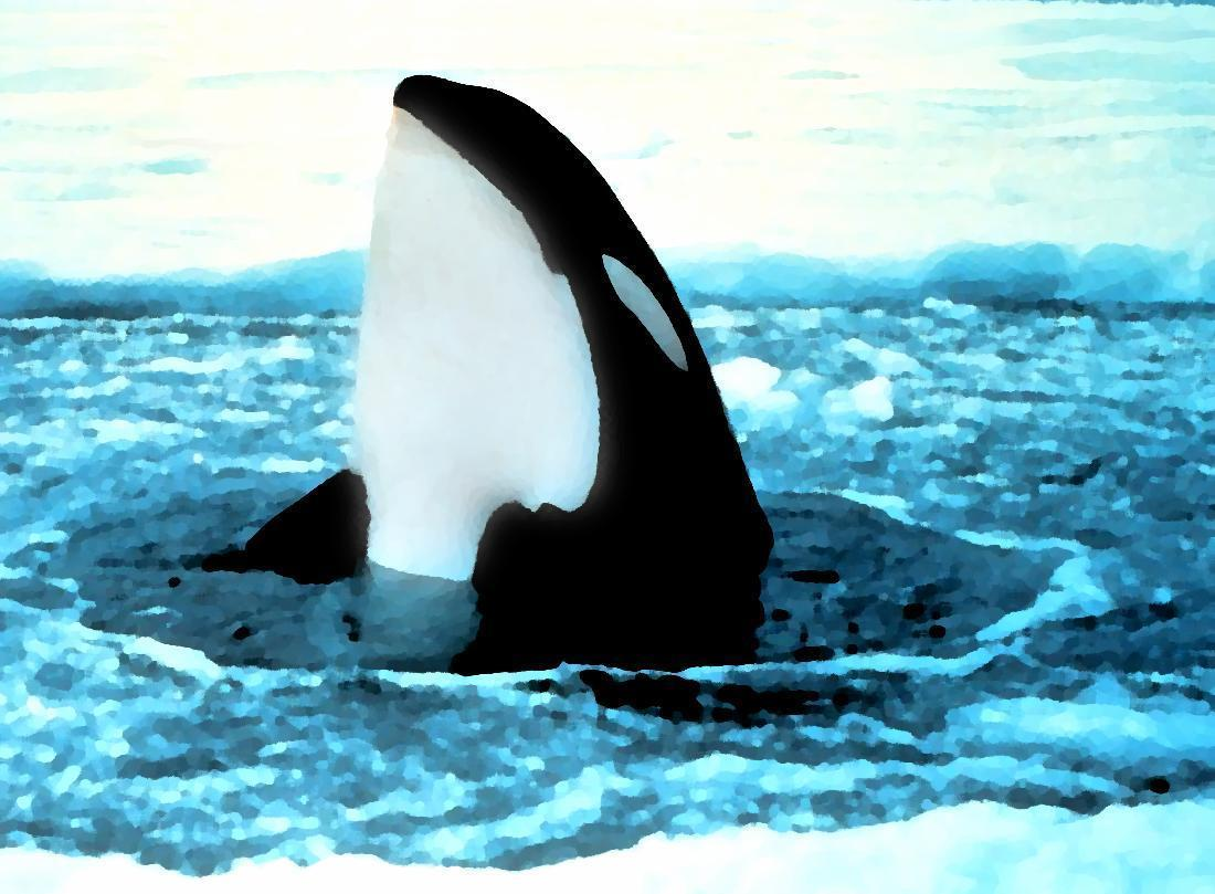 orca popping out of ice painting wallpaper – Animal Backgrounds