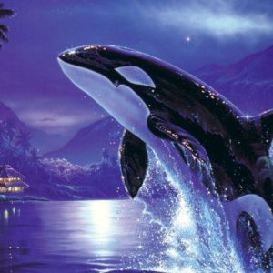 download Orca desktop wallpaper – Animal Backgrounds