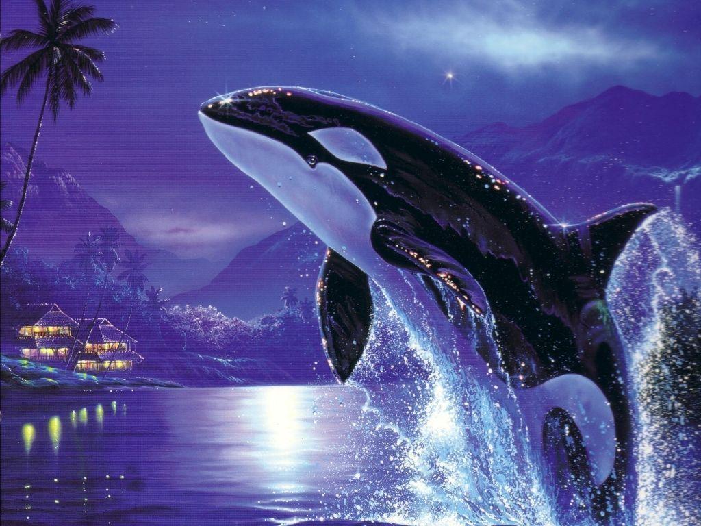 Orca desktop wallpaper – Animal Backgrounds