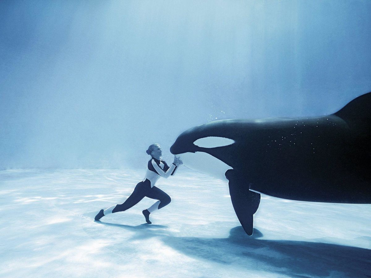 My slight orca whale obsession… on Pinterest | 22 Pins