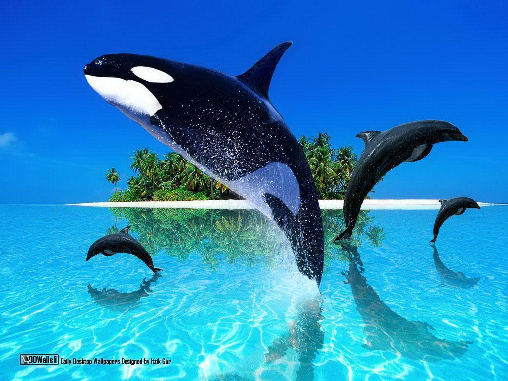 Orca fish computer illustration free desktop background – free …