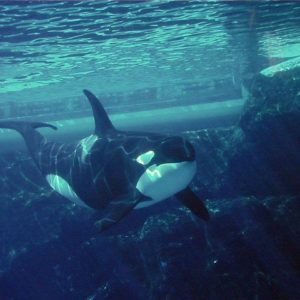 download Orca Wallpaper | Animals Wallpapers Gallery | PC Desktop Wallpaper