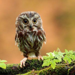 download Free Owl Wallpaper 37302 Wallpaper   wallpicsize.