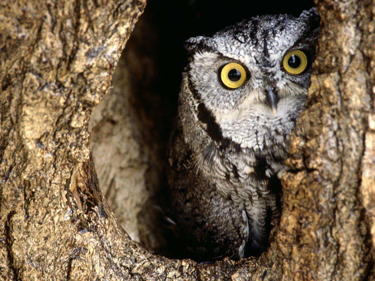 Owl Wallpapers – HD Wallpapers Inn