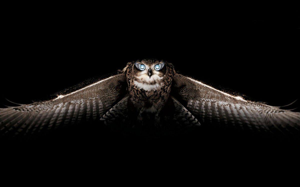 Owl Wallpaper HD – Animal Backgrounds