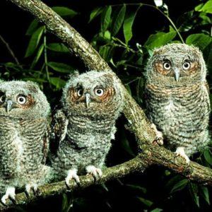 download Owl Wallpapers (Wallpaper 1-5 of 5)