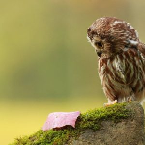 download Wallpapers For > Cute Baby Owl Wallpaper