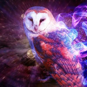download Owl Wallpapers – Full HD wallpaper search