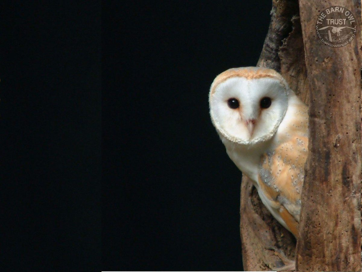 dark-owl-wallpaper-4.jpg