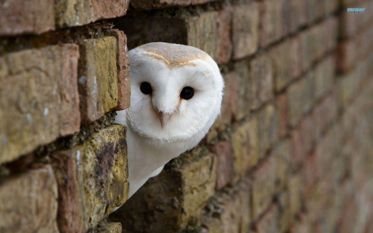 Interesting Owl Wallpaper Peeking Around Corner Building White …