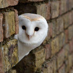 download Interesting Owl Wallpaper Peeking Around Corner Building White …