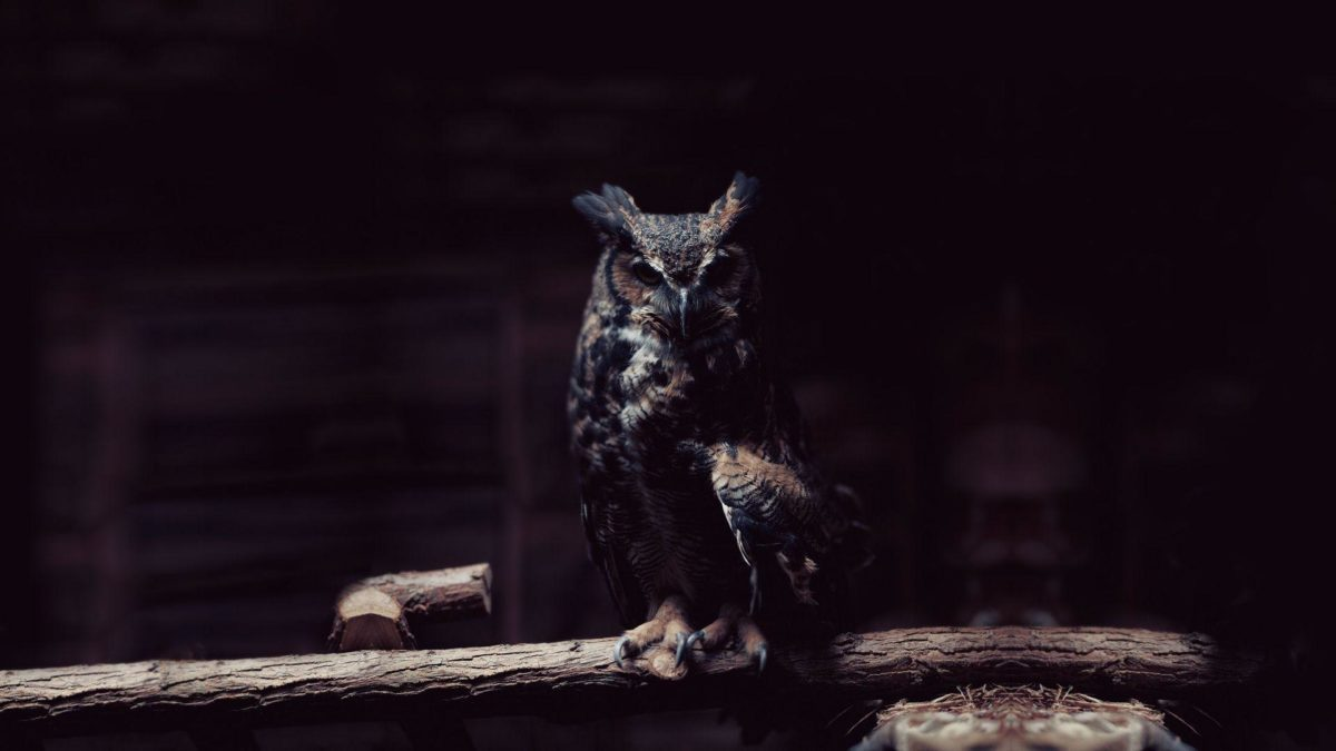 owl wallpaper | owl wallpaper – Part 2