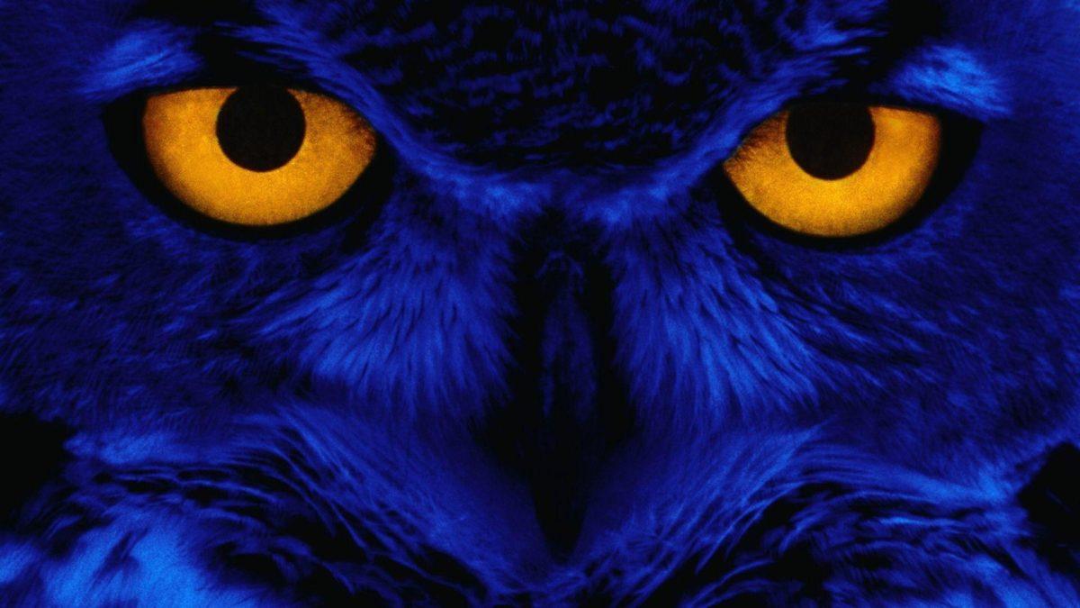 owl wallpaper | owl wallpaper – Part 3