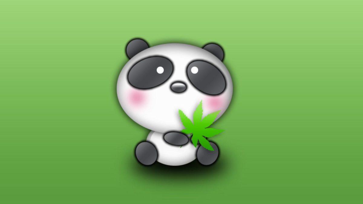 Panda bear desktop wallpapers in HD – Very cute bears from China