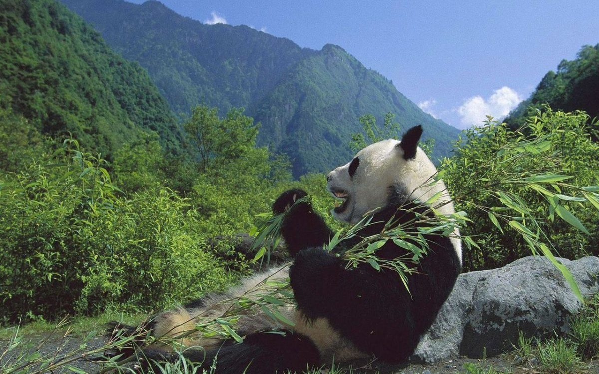 Animals Bears Wallpapers Page 1