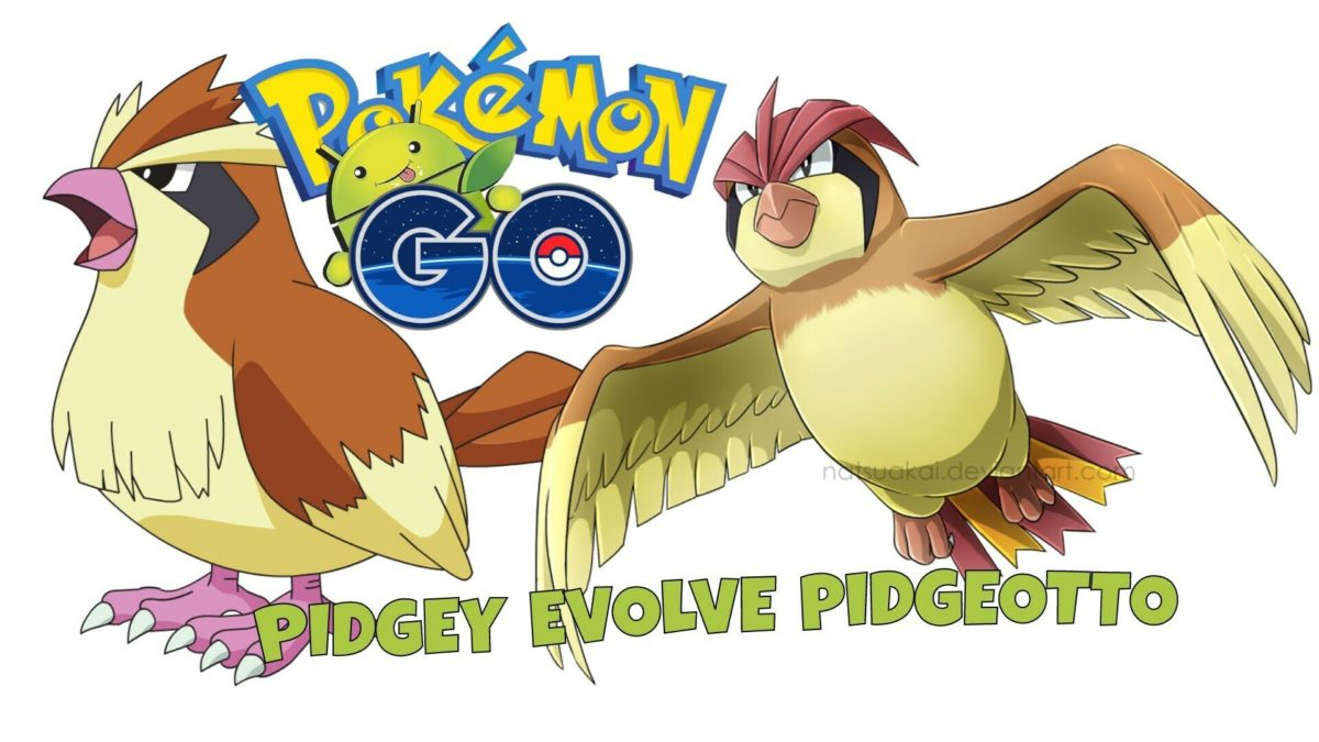Pokemon GO – PIDGEY evolve PIDGEOTTO – YouTube