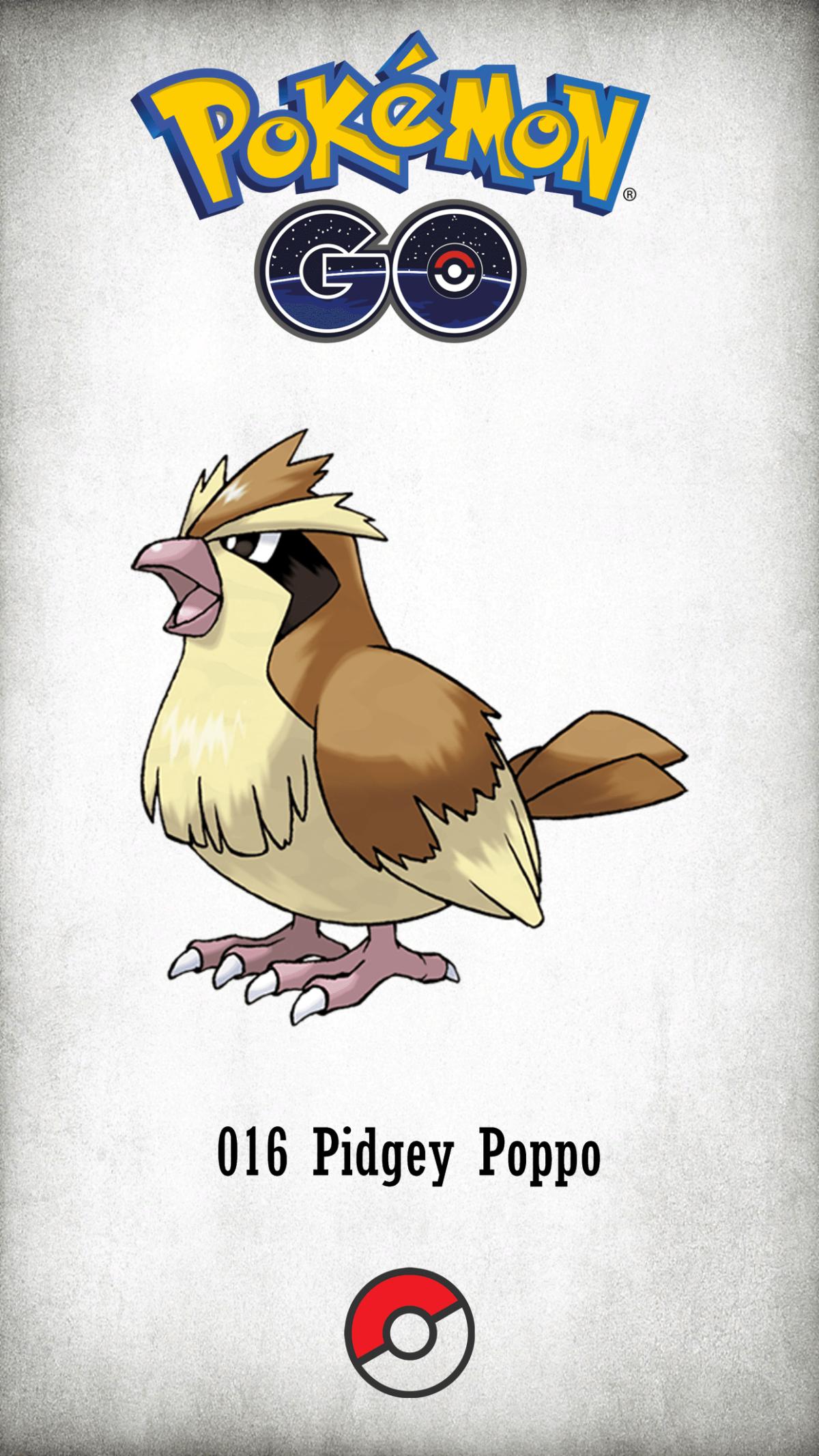 016 Character Pidgey Poppo | Wallpaper