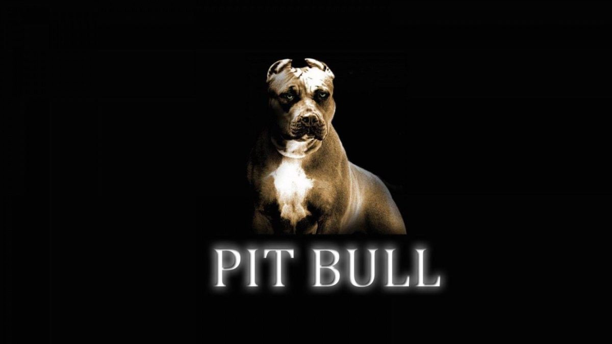 Pitbull Dog New Wallpapers | Pitbull Dog Pictures Free Download …