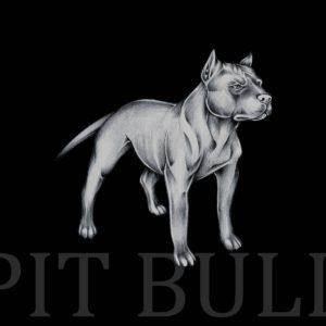 download Pit bull wallpaper wallpaper