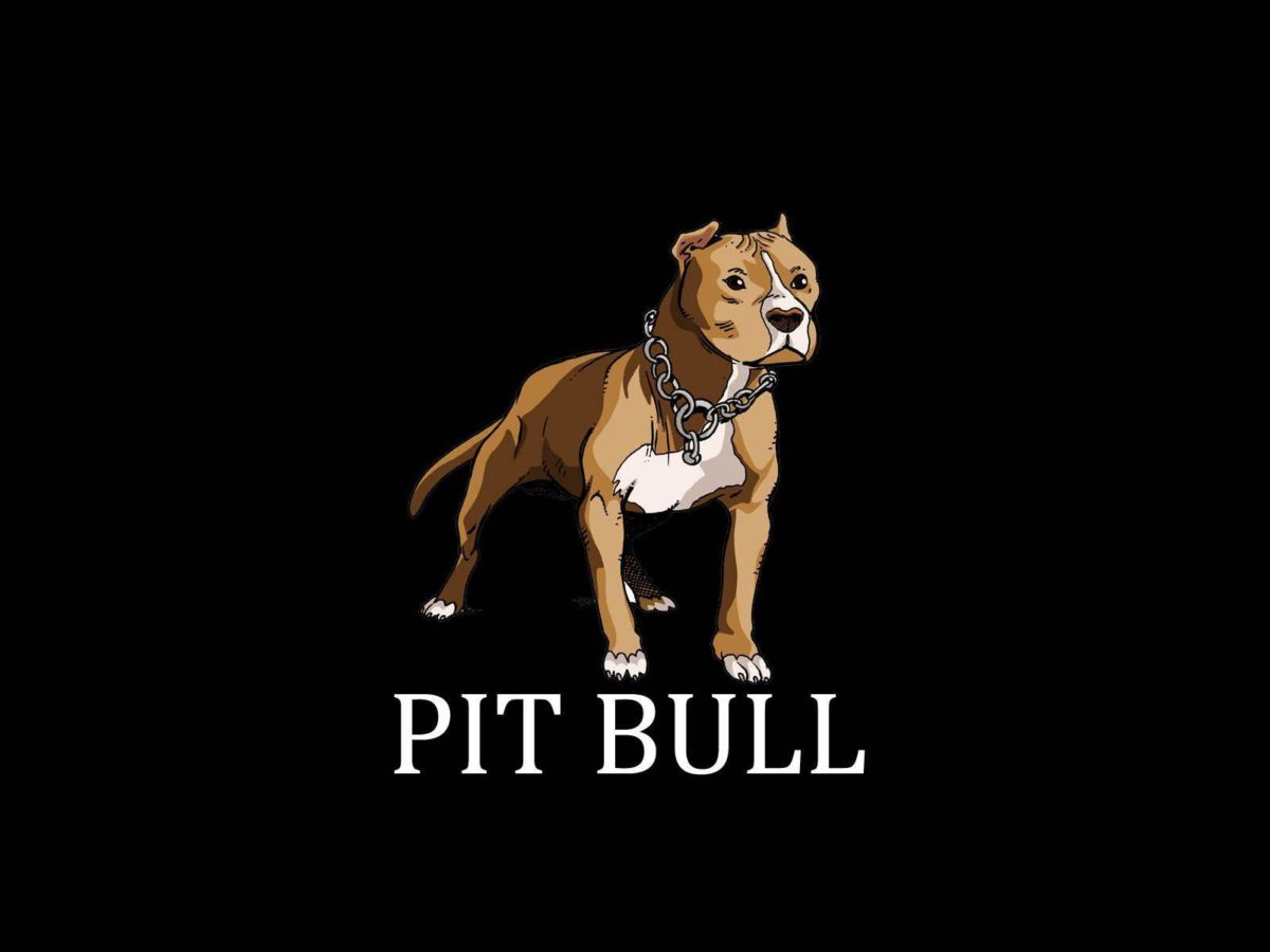 Painted pit bull terrier wallpaper