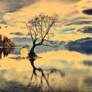 download Psyduck on a Lake – Nashville HD Wallpaper – Hot Wallpapers HD