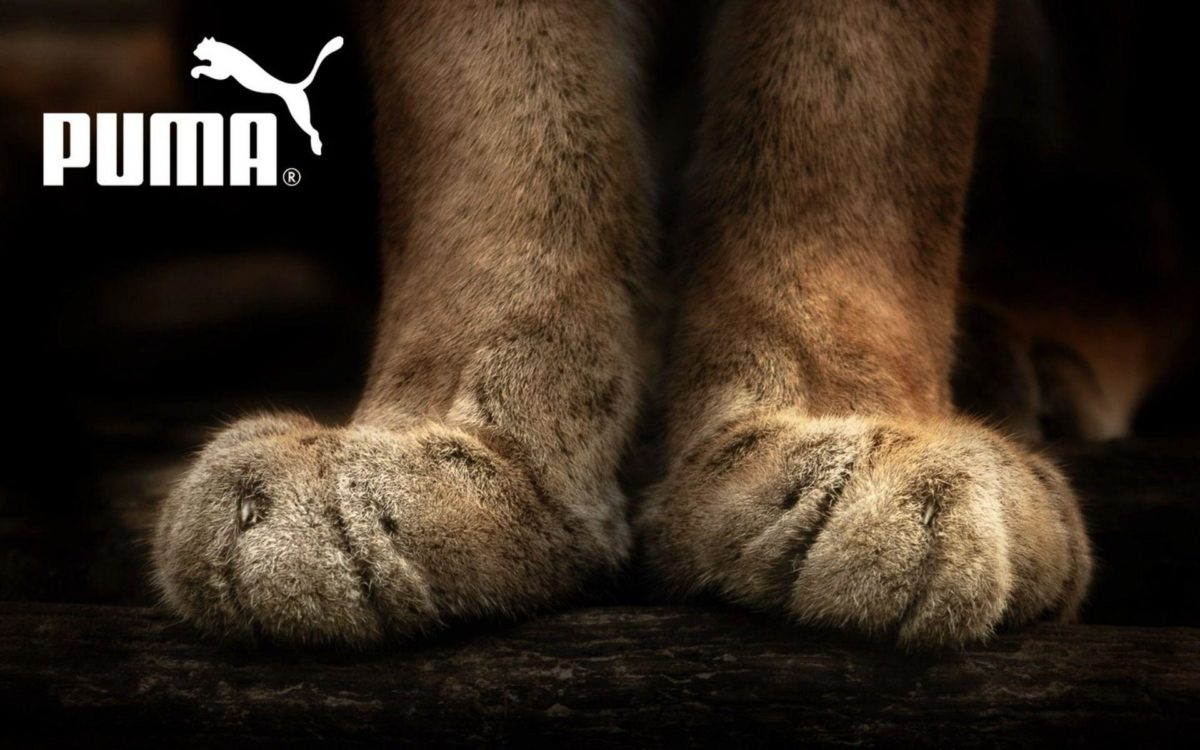 Puma wallpapers and images – wallpapers, pictures, photos