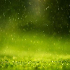 download Rain Drops Wallpapers | HD Wallpapers