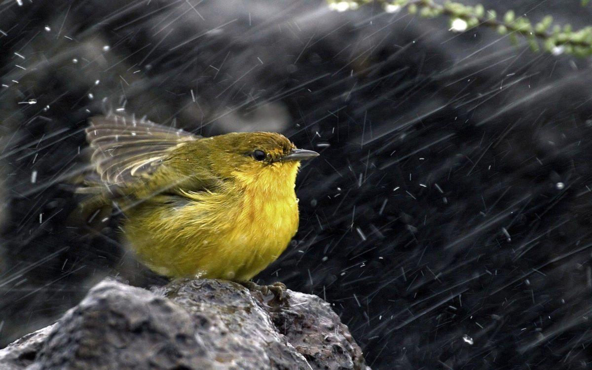 Bird On The Rain Wallpaper For PC #9304 Wallpaper | High …
