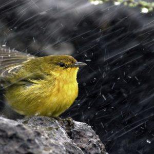 download Bird On The Rain Wallpaper For PC #9304 Wallpaper | High …