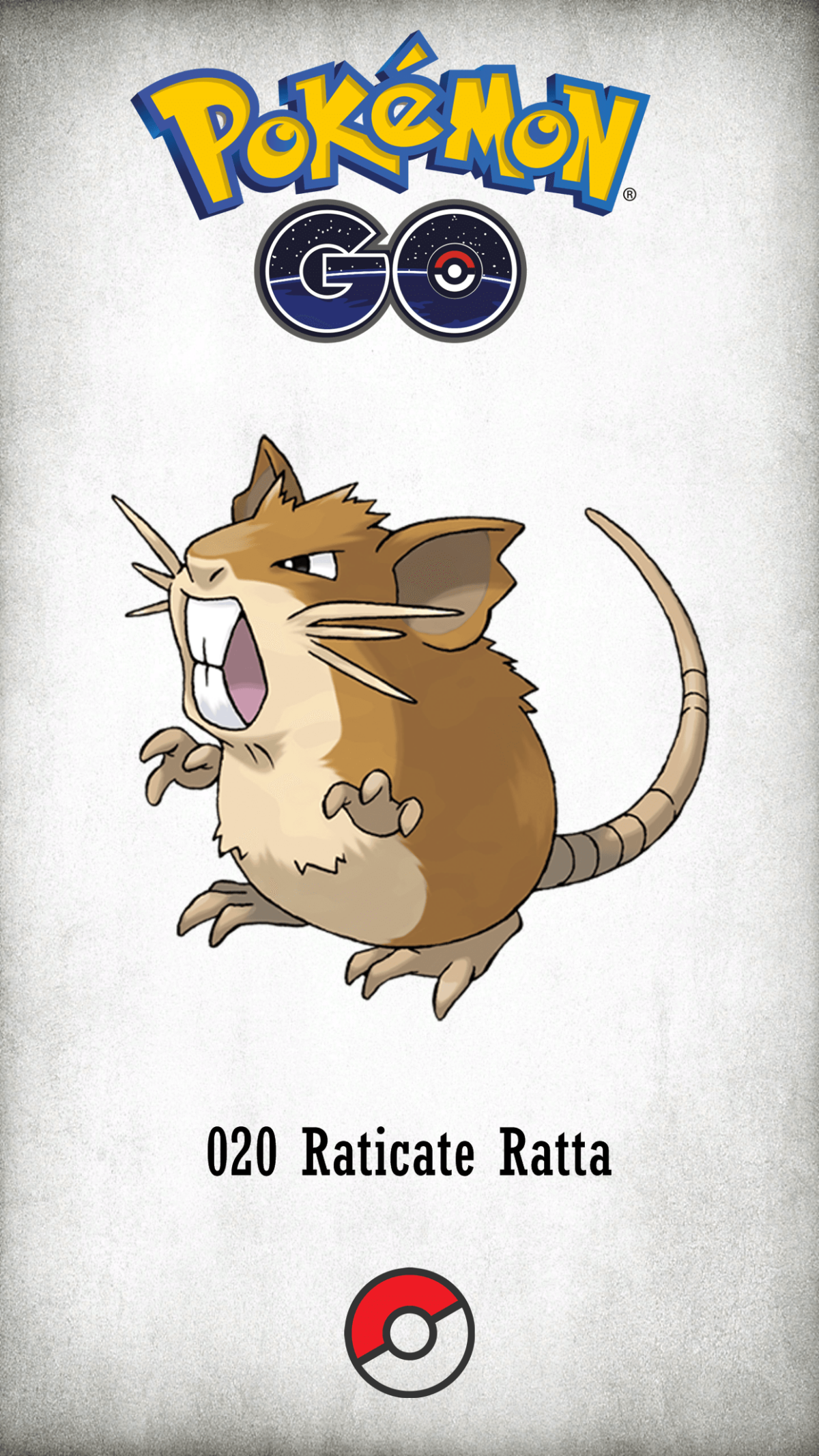 020 Character Raticate Ratta | Wallpaper