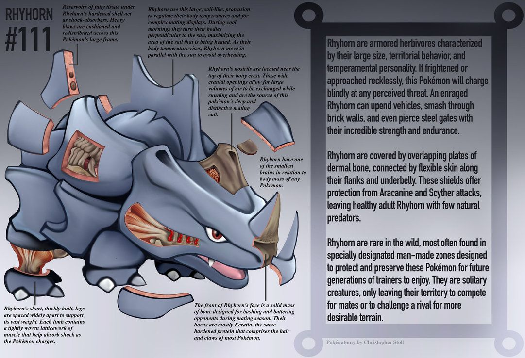Rhyhorn Anatomy- Pokedex Entry by Christopher-Stoll on DeviantArt
