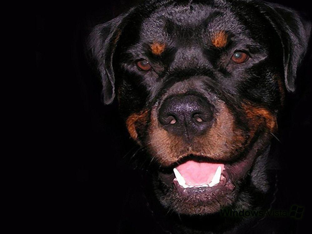 Rottweiler Wallpaper Images & Pictures – Becuo