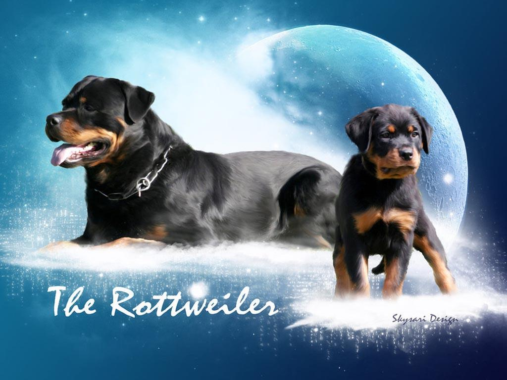 Cute Baby Rottweiler Wallpaper | WallpaperToon