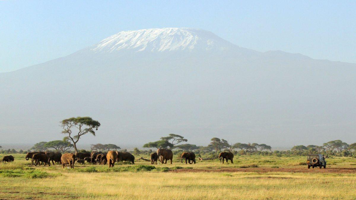 HD Kilimanjaro Safari Wallpaper   Download Free – 123474